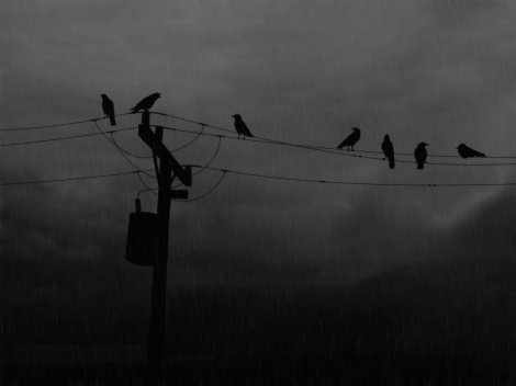 Rainy_Day_Crows